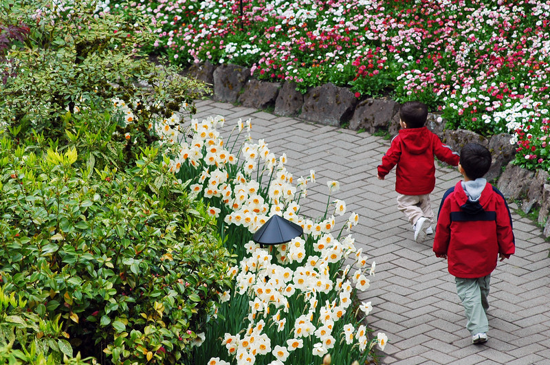 tourism - two boys run through butchart Gardens - Nature Stock Image by Professional Nature Photographer Christina Craft