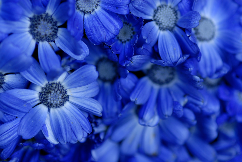 Blue flowers - blue - a bunch of flowers