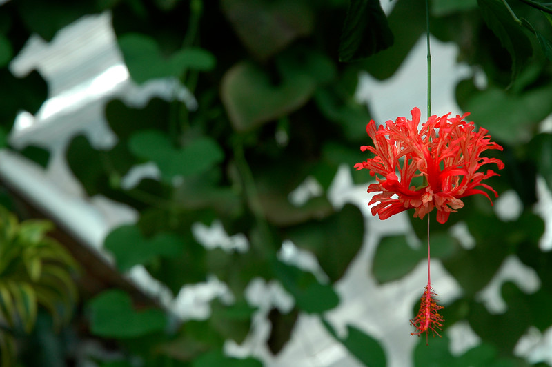 Tropical jungle and rainforest vegetation<br /> <br /> Professional Nature Photography by Christina Craft of the Nature Stock Photography Library