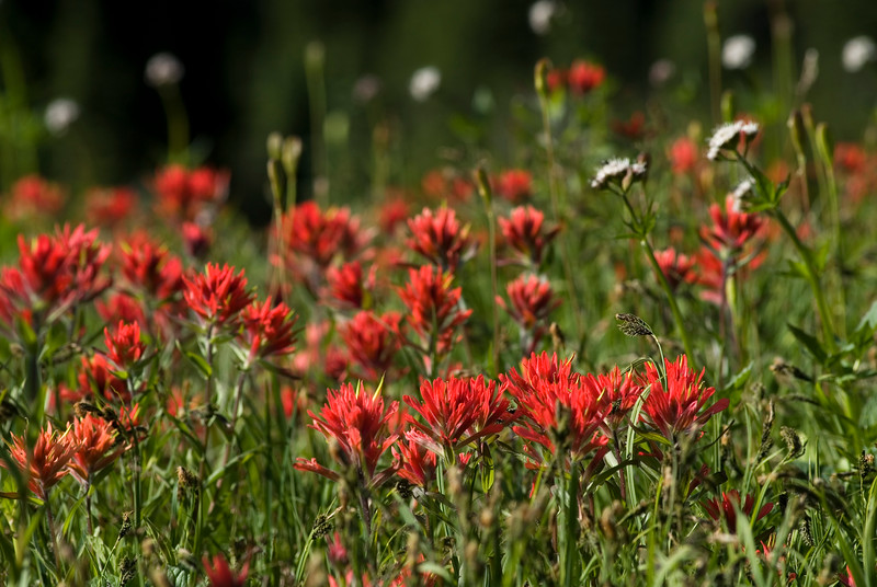 Flowers in a meadow - Stock Photo by Nature Photographer Christina Craft