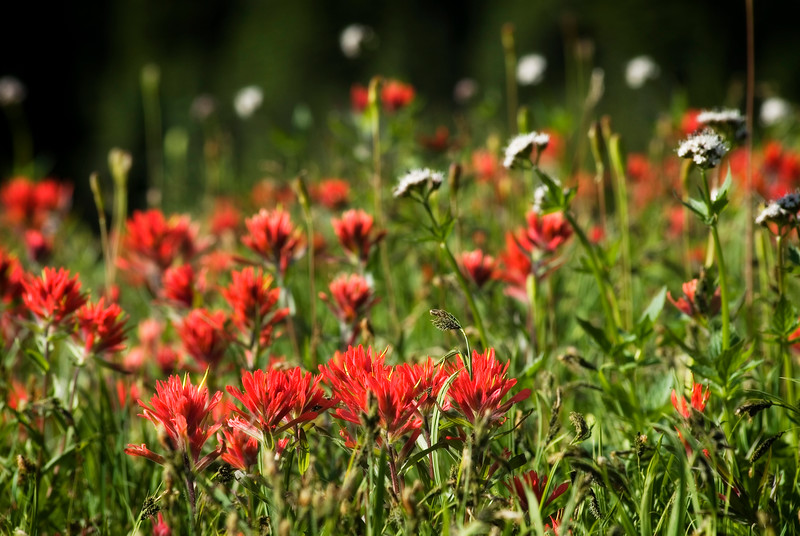 Flowers in a meadow - wild flowers - Stock Photo by Nature Photographer Christina Craft