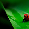 frog_CCC0026sm