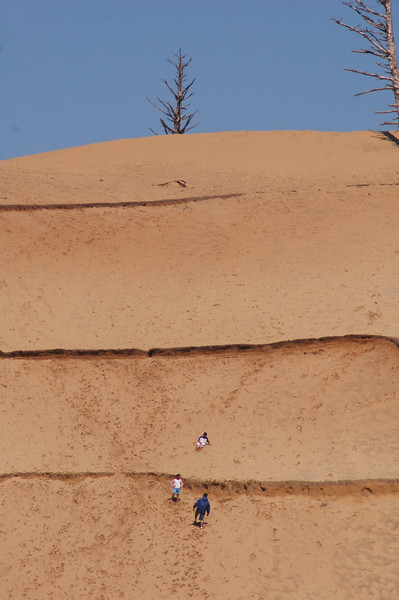 Sand dunes in Oregon USA - American Coastlines - by Nature Photographer Christina Craft - Thousands of nature and wildlife photos available here in the Nature & Wildlife Photo Library.