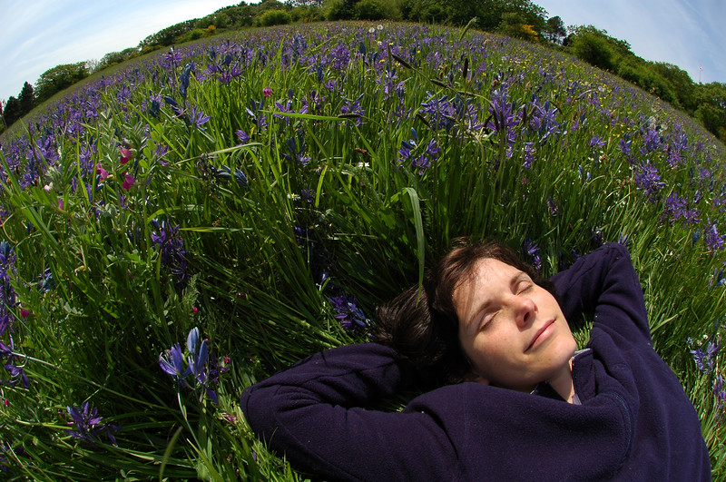 Sleeping and day dreaming in a meadow surreal photography with a fisheye lens - Nature Stock Image by Professional Nature Photographer Christina Craft