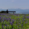 Meadow meeting the ocean - a person relaxes on a park bench - Nature Stock Image by Professional Nature Photographer Christina Craft
