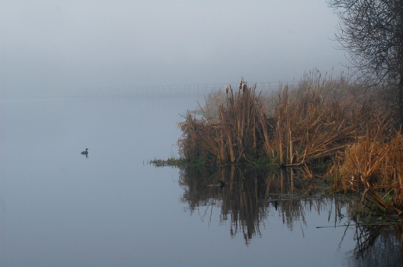 lake covered in fog in autumn with a mallard duck swimming by<br /> Professional Wildlife Photography by Christina Craft of the Nature Stock Photography Library