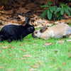 Two rabbits in love<br /> Professional Wildlife Photography by Christina Craft of the Nature Stock Photography Library