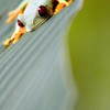 Red Eyed Tree Frog - Costa Rica by Christina Craft of the Nature Stock Photography library