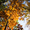 Glen Carlyn Park - Trees near the Nature Center