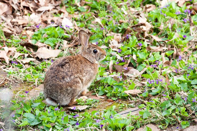 More rual Arlington VA wildlife