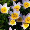 Flowers at Bon Air Park, Arlington