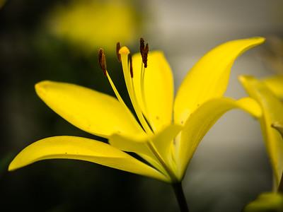 Nature-0147