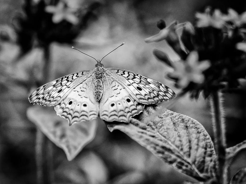 Nature-0164-Edit