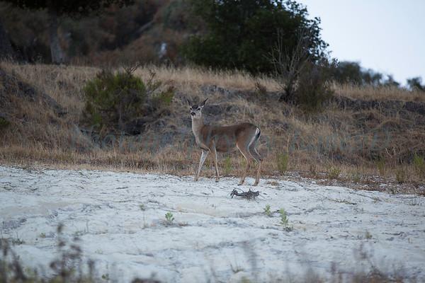 Lopez_Lake_Wildlife_20150628-167