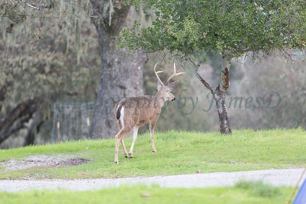 Lopez Lake Animals 20161112-445