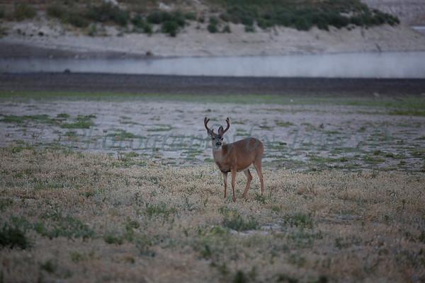 Lopez_Lake_Wildlife_20150628-188