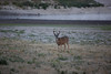 Lopez_Lake_Wildlife_20150628-188
