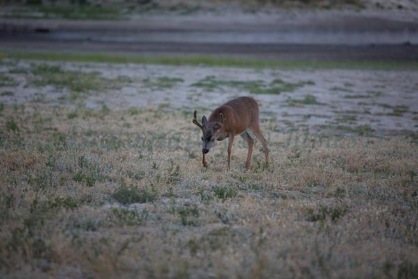 Lopez_Lake_Wildlife_20150628-229