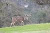 Lopez Lake Animals 20161112-543