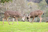 Lopez Lake Animals 20161112-498