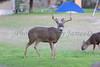 Lopez Lake Animals 20161112-977