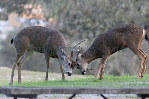 Lopez Lake Animals 20161112-937