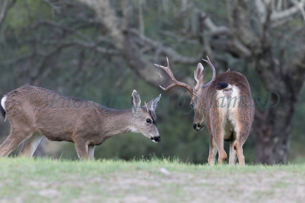 Lopez Lake Animals 20161112-1026