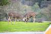Lopez Lake Animals 20161112-501