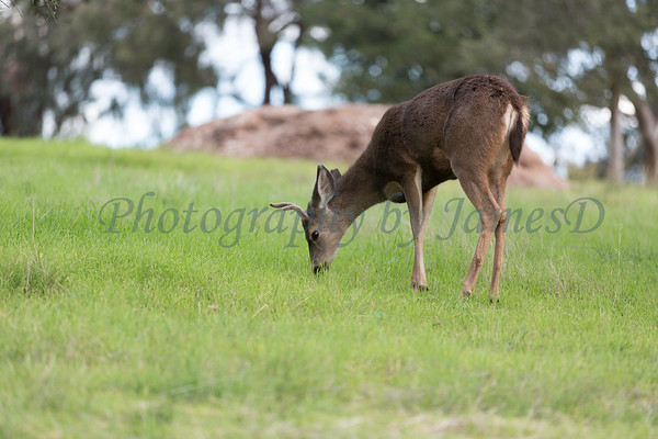Lopez Lake Animals 20161112-408