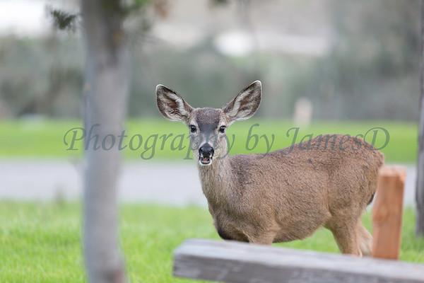 Lopez Lake Animals 20161112-467