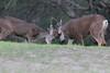 Lopez Lake Animals 20161112-1034