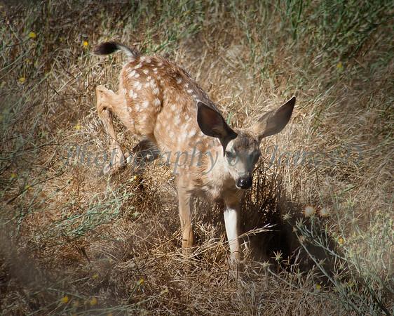 Deer Proofs