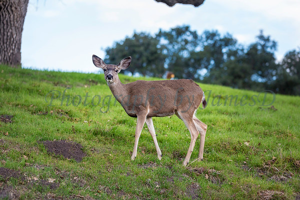 Lopez Lake Animals 20161112-389