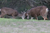 Lopez Lake Animals 20161112-1033