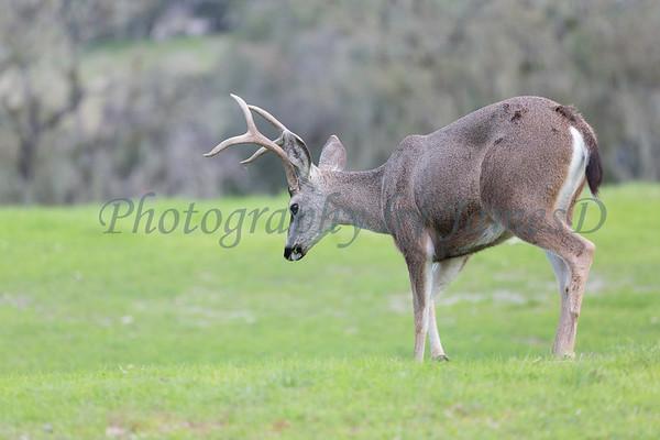 Lopez Lake Animals 20161112-696