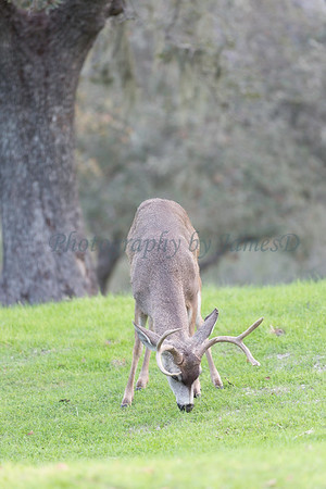 Lopez Lake Animals 20161112-694