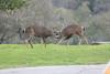 Lopez Lake Animals 20161112-526