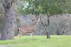Lopez Lake Animals 20161112-487