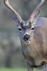Lopez Lake Animals 20161112-804