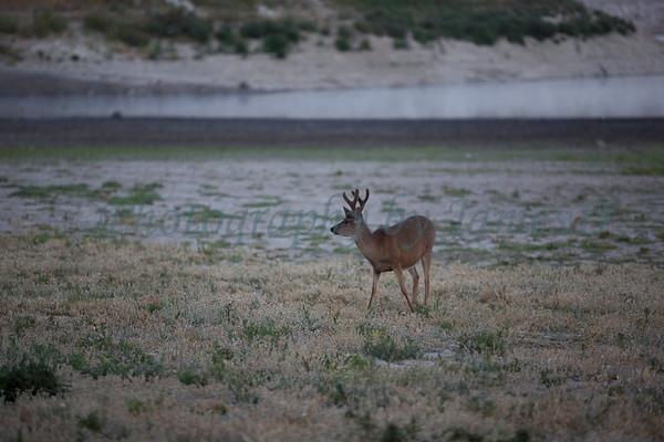 Lopez_Lake_Wildlife_20150628-181