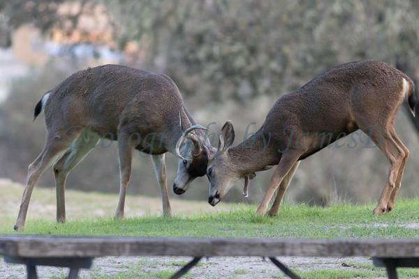 Lopez Lake Animals 20161112-941