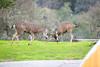 Lopez Lake Animals 20161112-502