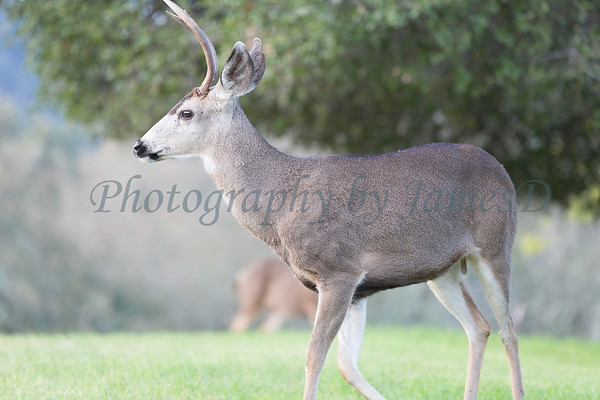 Lopez Lake Animals 20161112-1063