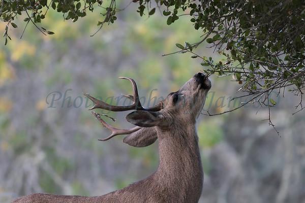 Lopez Lake Animals 20161112-1077