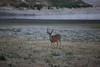 Lopez_Lake_Wildlife_20150628-190