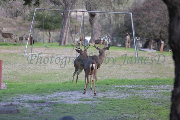 Lopez Lake Animals 20161112-950