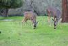 Lopez Lake Animals 20161112-717