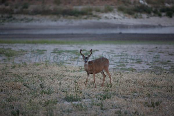 Lopez_Lake_Wildlife_20150628-206