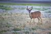 Lopez_Lake_Wildlife_20150628-223