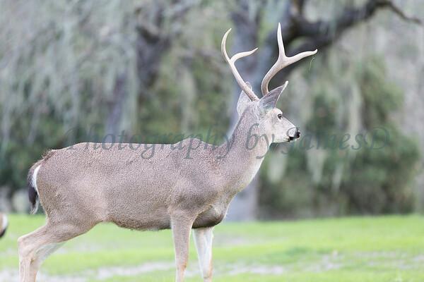 Lopez Lake Animals 20161112-681